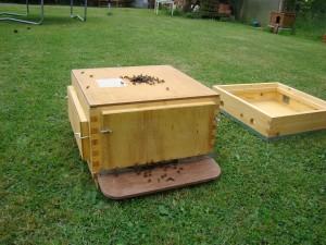 API abeilles élevage (34)