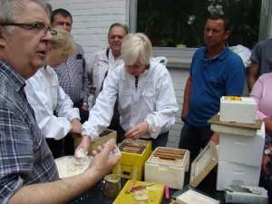 API abeilles élevage (12)