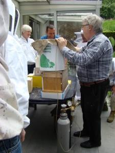 API abeilles élevage (14)