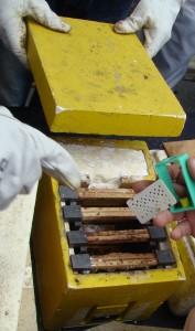 API abeilles élevage (19)