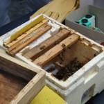 API abeilles élevage (22)