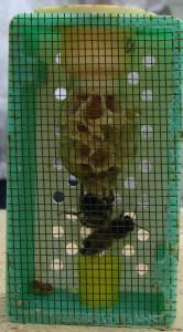 API abeilles élevage (5)
